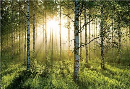 Green forest non-woven wall mural